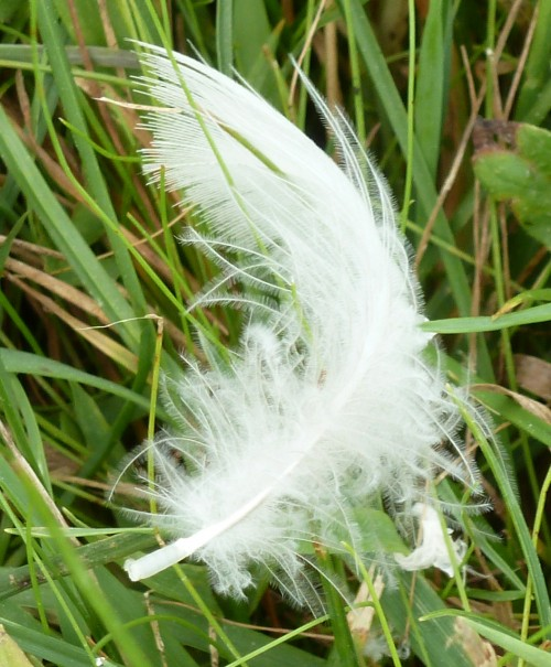 One Little White Feather from an Angel