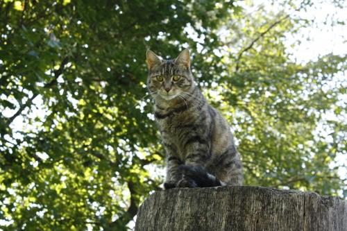 My own cat, Catty.