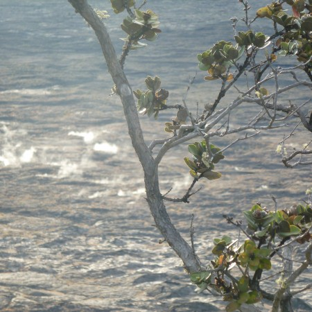 Renewed Life near the Halema'uma'u Crater in Hawai'i.