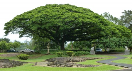 An infinite tree of souls