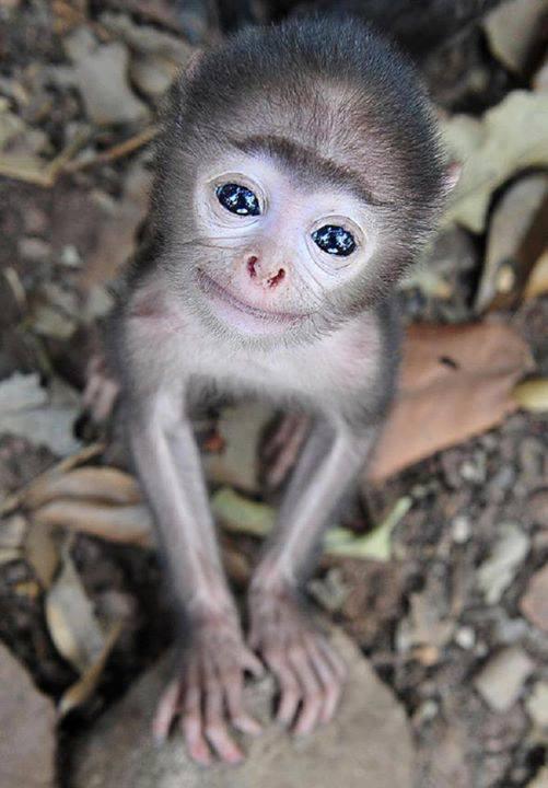 super sweet baby monkey